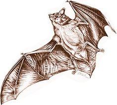 MU Extension publication G9460, Bats: Information for Missouri Homeowners