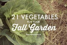Wondering what to plant in your fall garden? This post has instructions and details for 21 of your favorite veggies.