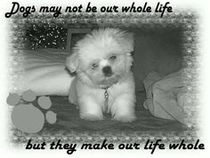 :) Little Monsters, Cute Animal Pictures, Puppy Love, Cute Animals, Puppies, Babies, Pets, Inspiration, Pretty Animals