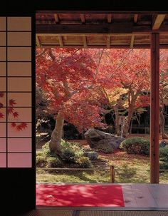 Japanese maples in autumn