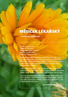Calendula, Gardening, Style, Swag, Lawn And Garden, Outfits, Horticulture