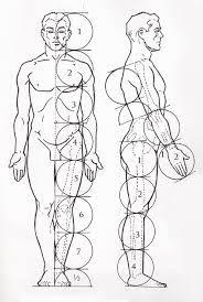 Resultado de imagem para medidas e escalas do corpo humano