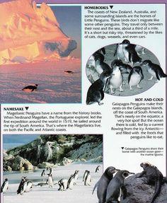 Penguin Facts | Penguin Place Penguin Facts, Penguins, New Zealand, Coast, Australia, Island, Places, Nature, Movie Posters