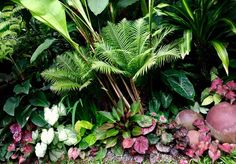 Tropical border planting in the Singapore Garden of Irene Ngoo