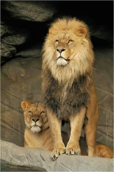 - King and queen....