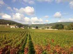 Vineyards of Chambertin #France #Burgundy #europe #exploring #wine