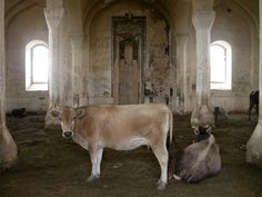 We can all agree that a few things are as creepy as ghost towns. Sweet Cow, Travel News, Ghost Towns, Mosque, Creepy, Horses, Animals, Beautiful, Cows
