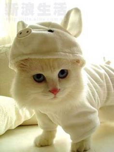 Dressed up kitty!! I pinned this bc nit only is this way too cute, but people posted ridiculous comments that dressing up an animal is cruel. Really people??? There are plenty of things that are cruel in this world. This is not one of them. The kitty looks fine to me. :)