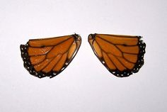 Tattered Monarch Butterfly Wings Orange and Black by annimae182, $6.50