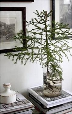 Smart Living Tip: Keep a cut tree branch. Use a pair of gardening shears to cut any type of tree or shrub branch preferred at diagonal angle. Remove leaves or needles from the bottom portion of the branch and place in water. Add one tablespoon honey dissolved in a cup of warm water to encourage rooting and prevent rotting.