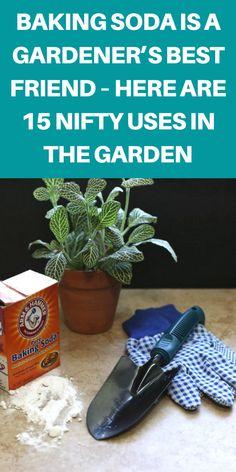 Growing Vegetables In Pots, Container Gardening Vegetables, Growing Herbs, Growing Flowers, Vegetable Gardening, Garden Ideas Budget Backyard, Garden Ideas To Make, Diy Garden Projects, Outdoor Projects