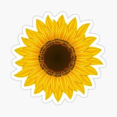 Sunflower PNG Clipart in category Flowers PNG / Clipart - Transparent PNG pictures and vector rasterized Clip art images. Sunflower Room, Sunflower Party, Yellow Sunflower, Yellow Flowers, Colorful Flowers, Sunflower Clipart, Sunflower Images, Sunflower Flower, Planting Sunflowers