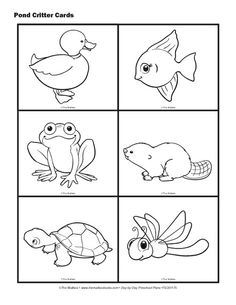 Science Cards:  Pond Animals (Pond Critter Cards)