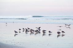 Left Coast, Best Coast  {northern California photographer}  nadeenflynn.com