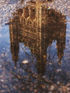 palace in a puddle. Westminster, London, England.