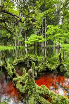 Fisheating Creek Florida. Photo by © Enis Alsan
