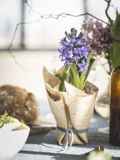 Hyacint in een jute jas Mooiwatplantendoen.nl
