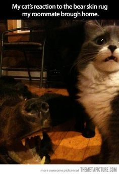 A cat's priceless reaction…