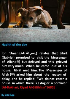 Dogs and potraits in the house. Islam Hadith, Allah Islam, Islam Muslim, Islam Quran, Hadith Quotes, Quran Quotes, Religious Quotes, Islamic Quotes, Hadith Of The Day