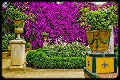 Spanish colour - Casa de Pilatos, Sevilla