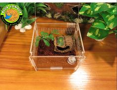 Terrarium, Spider Transport House, Organic Pet World Beloved Royal Bloodline Reptiles and Creepy Cute Companions to the World