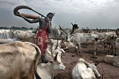 Man using a horn instrument while guarding cattle in south sudan. Join us on safari in 2016.