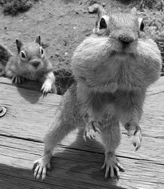 Picture Used on NSVH.  October is Squirrel Awareness Month Album.  Why is he following me?