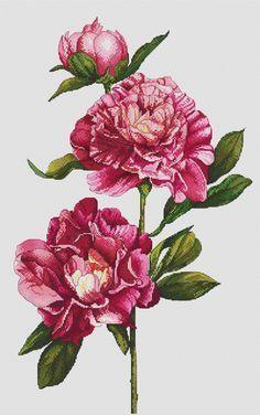 Cross stitch pattern Peonies needlepoint flowers by LaMariaCha