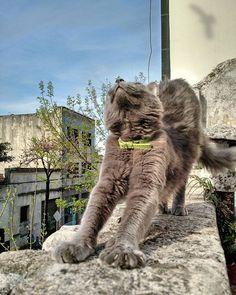 Estirandose al solsito! Lo Amo! ❤😍 #vacation #cat #dedication #cats #catsofinstagram #education #catstagram #instacat #catlover #catoftheday #panicatthedisco #ilovemycat #catsagram #vacations #dedicated #catering #lovecats #bestvacations #catlovers #blackcat #catwalk #Cathedral #instagramcats #communication #Ducati #location #kittycat #catalunya #dreamcatcher #instacats