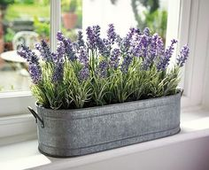 thegardeningclan | Want to plant lavender in our bedroom for esthetics and air purification.