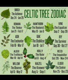 The Celtic Zodiac is based on the cycles of the moon. The year is divided into - Tattoo Pins The Celtic Zodiac is based on the cycles of the moon. The year is divided into Celtic Astrology, Celtic Zodiac Signs, Irish Celtic, Celtic Designs, Book Of Shadows, Magick, Witchcraft, Herbs, Druid Symbols