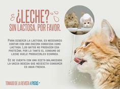 ¿LECHE?, Sin Lactosa, Por Favor.