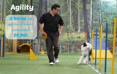 Agility en Maskokotas #adiestramiento #mascotas #perros #Maskokotas #agility
