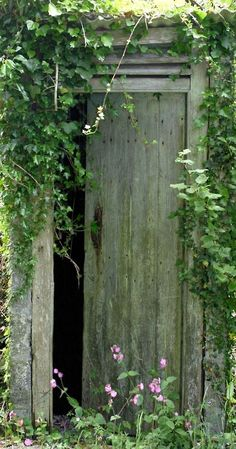 Old weathered door surrounded by ivy