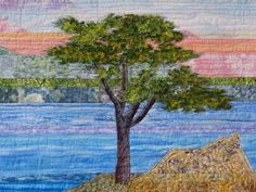 Detail of Lone Cypress Tree  cathygeier.com