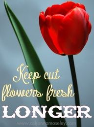 How to keeping flowers fresh, longer- Ask Anna gardening