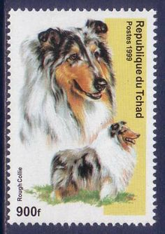 Rough Collie Dogs Chad Tchad MNH stamp 1999