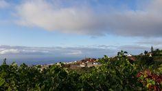 Icod de los Vinos, Tenerife, Spain.