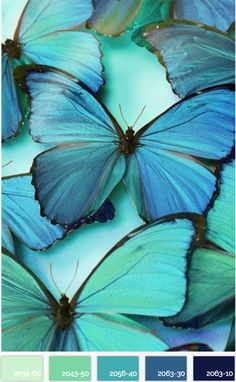 Blue and turquoise butterfly colour palette. Morpho Bleu, Morpho Butterfly, Butterfly Wings, Butterfly Kisses, Purple Butterfly, Blue Butterfly Meaning, Cabbage Butterfly, Butterfly Photos, Beautiful Butterflies