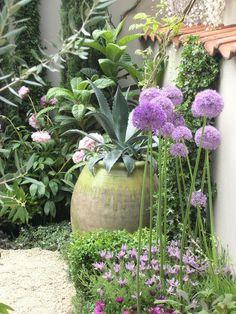 Agave Zierlauch Lavendel mediterran