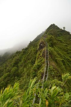 Stairway to Heaven (Oahu, Hawaii) Hawaii Vacation Rentals, Stairway To Heaven, Oahu Hawaii, Stairways, Places To Go, Trail, Exotic, Outdoors, Holidays