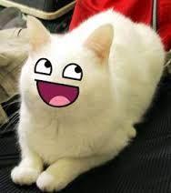 cat breading aliens - Google zoeken