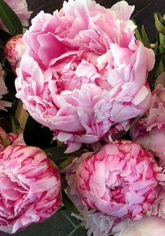 Peonies ~ from French farmers markets. Photo by Jane LaFazio. I think I'd like to plant some peonies. They are so pretty and full. Fresh Flowers, Pink Flowers, Beautiful Flowers, Sugar Flowers, Exotic Flowers, Yellow Roses, Pink Roses, Arte Floral, Peony Flower