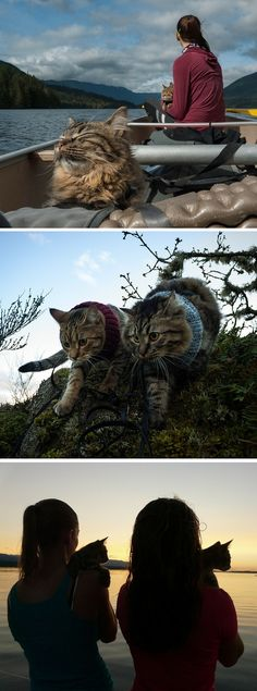 These two cats started off as strays, but now their rescues take them everywhere! Camping and hikes included.