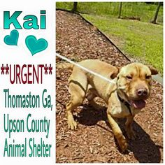 Please Adopt - Thomaston Ga ~ Meet Kai, he is a wonderful, happy young boy around 1year, Kai is in need of a adopter or immediate rescue.