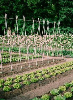 Garden variety gorgeous