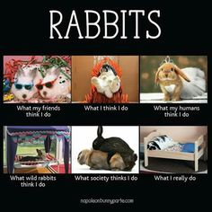 O yeah this is true (Mini Lop Rabbit Houses)