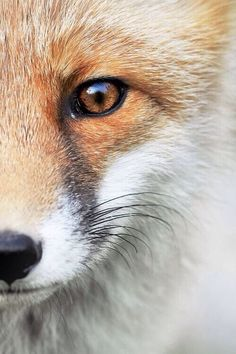 they are the hunters, we are the foxes // and we run