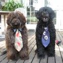 The 2013 Chuck & Don's Happiest Pet Contest Winners