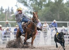 Tyler Garten competes in the tie-down roping event during the Cheyenne Frontier Days rodeo in Cheyenne, Wyoming